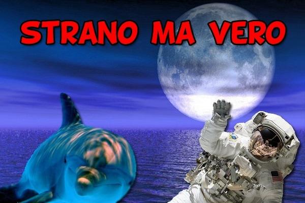 Lo sapevi che? Cinque incredibili curiosità sulla luna, sui delfini e… | Strano ma vero!