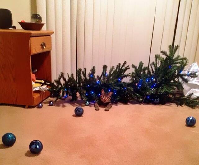 Avete un gatto? Il vostro albero di Natale non resterà in piedi fino alla fine delle vacanze! Guardate qui