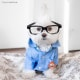 Toby LittleDude: il cane più hipster di Instagram / Image 5