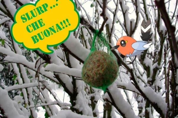 Aiuta gli uccellini a superare il freddo: prepara una torta!