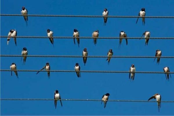 Perché gli uccelli posati sui fili della luce non prendono la scossa?