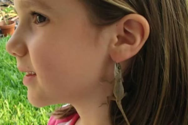 Animali divertenti: le lucertole adorano le orecchie!