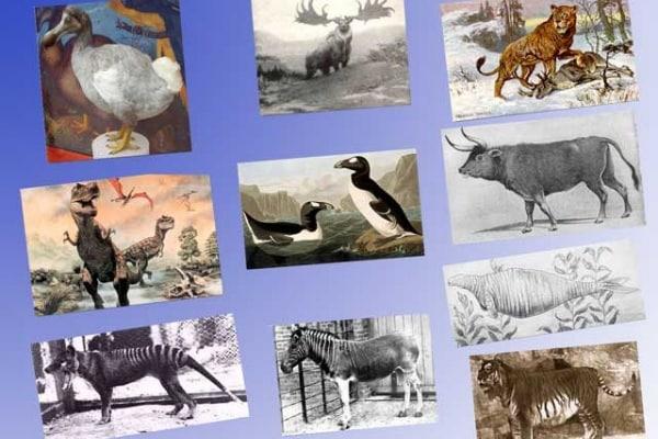 I 10 grandi animali estinti più strani del mondo (a parte i dinosauri!)