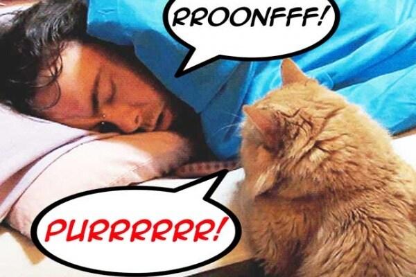Curiosità animali | 7 motivi per cui i gatti sono le migliori sveglie del mondo!