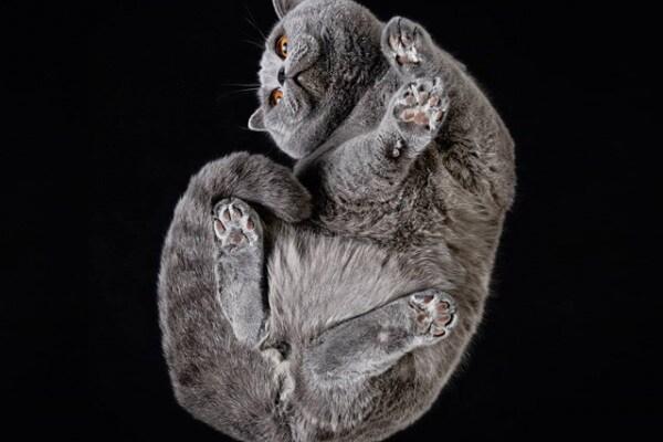 Mici sottosopra, foto di felini immortalati dal basso
