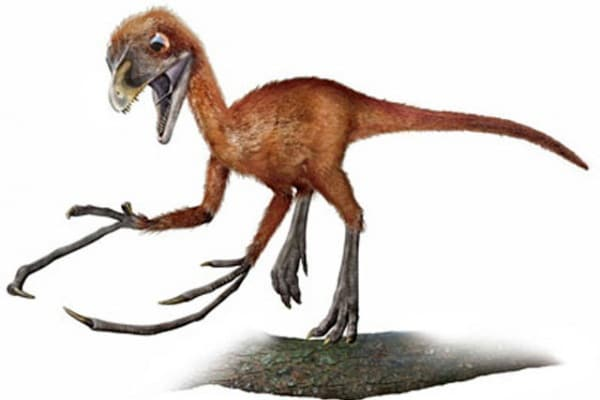Dinosauri: ma qual era il più piccolo?