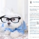 Toby LittleDude: il cane più hipster di Instagram / Image 4