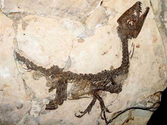 Quante ne sai su…? Foto quiz sui nostri amici dinosauri!