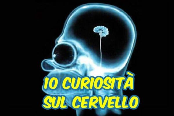 Lo sapevi che | 10 incredibili curiosità sul cervello umano