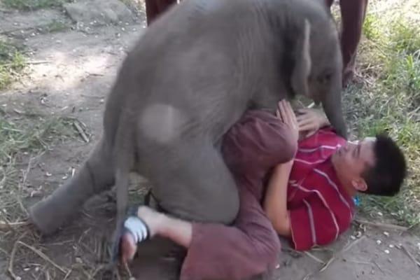 Elefantini da ridere | Da quello che ama gli abbracci a quello che adora la piscina