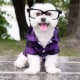 Toby LittleDude: il cane più hipster di Instagram / Image 3