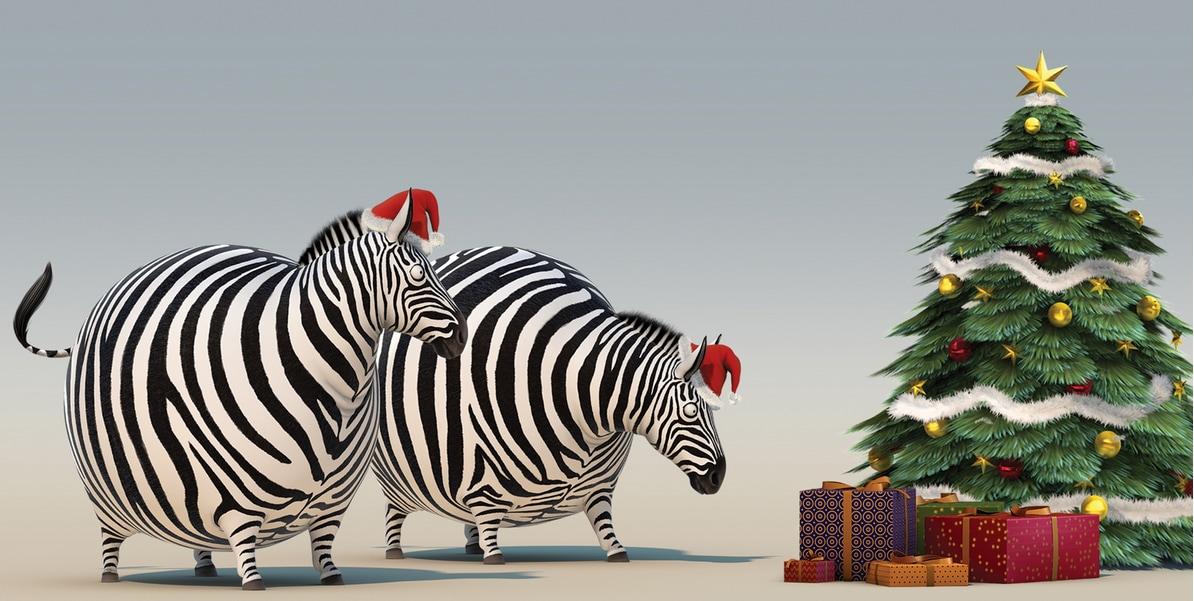 Raccolta | Video di animali a Natale, tutti da vedere