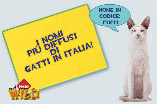Come chiamo il mio gatto? I nomi più rari e più diffusi in Italia