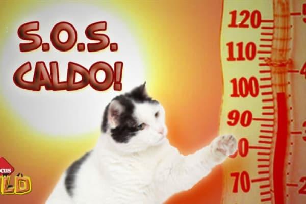 Lo sapevi che | Otto consigli per difendere i gatti dal caldo estivo