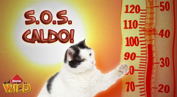 Otto consigli per difendere i gatti dal caldo estivo