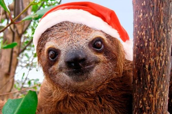 Lo sapevi che | Anche gli animali sentono il clima natalizio!