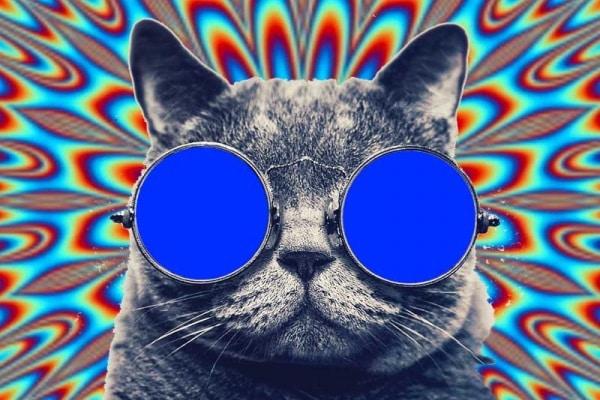 Il mondo visto con gli occhi di un gatto