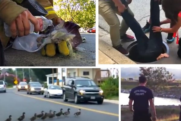 Video straordinari | Animali salvati per miracolo!