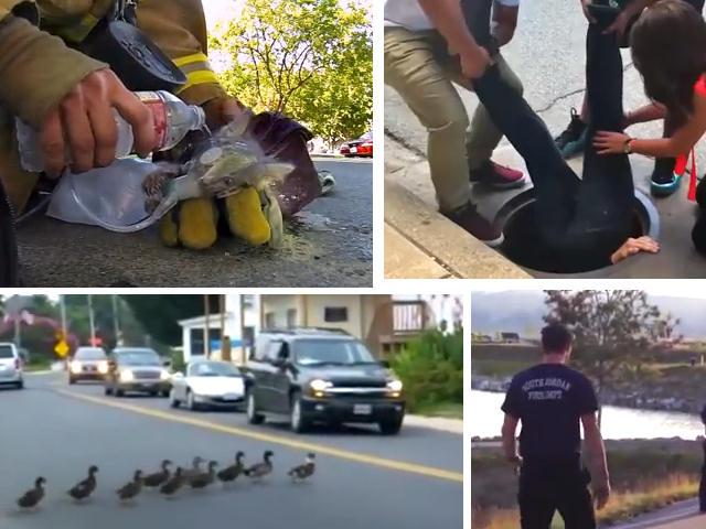 Video straordinari   Animali salvati per miracolo!