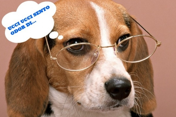 Come funziona l'olfatto degli animali?