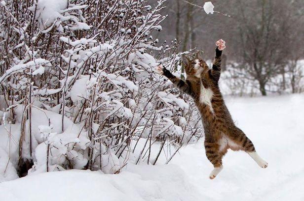 Animali sotto la neve!