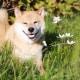 Dal cane che fa Yoga a quello che veste come una persona. I cani più famosi e divertenti su Internet / Image 6