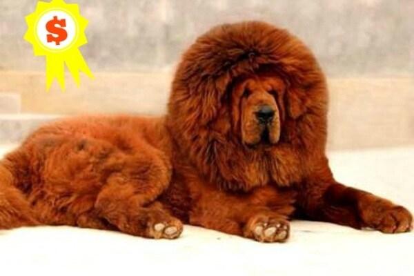 Record da cani: ma quanto mi costi?