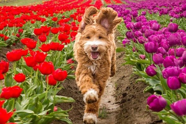 Il cane più seguito al mondo. Mr.Reagan è il re dei social