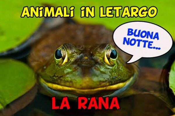 Anche la rana va in letargo!