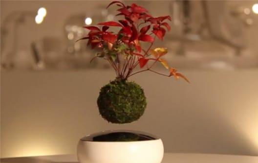 Bonsai volanti | Una novità dal Giappone