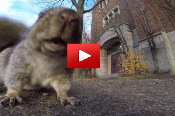 [VIDEO] Scoiattolo ruba una telecamera e la porta sull'albero