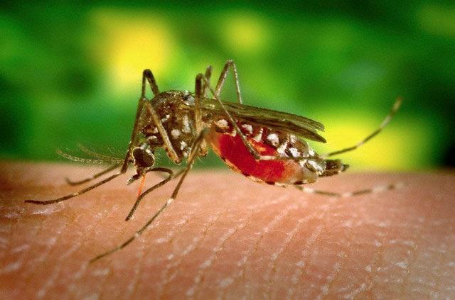 Perché le zanzare pungono alcune persone e altre no?