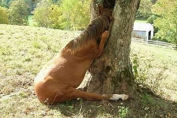 Animali divertenti | Aiuto sono rimasto incastrato!