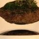 Bonsai volanti | Una novità dal Giappone / Image 7