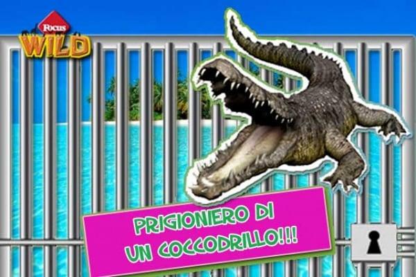 Curiosità animali | Un coccodrillo tiene in ostaggio un canoista su un'isola deserta
