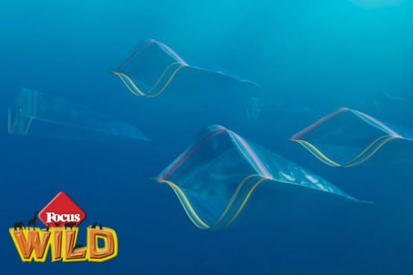 Curiosità | Un oceano di plastica