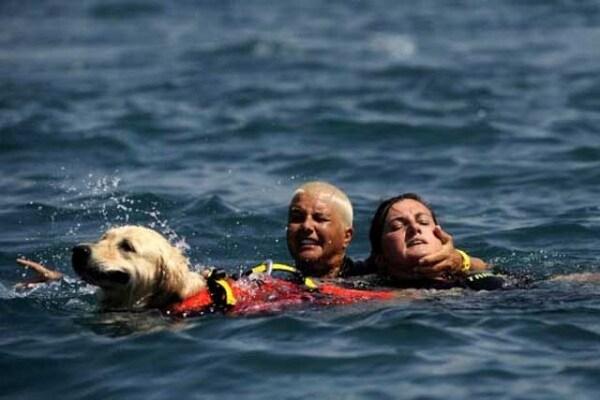 Professione cane-bagnino | Salvare vite è il mio mestiere!