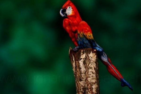 Illusioni ottiche | Un pappagallo molto speciale