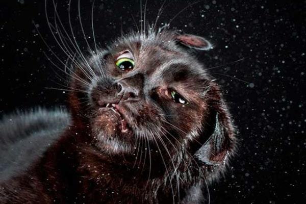 Foto buffe di gatti che si scuotono