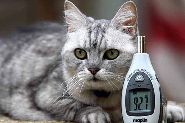 Il gatto che fa le fusa più rumorose del mondo!