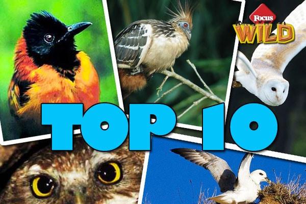Animali curiosi: 10 uccelli con strambe tecniche di difesa