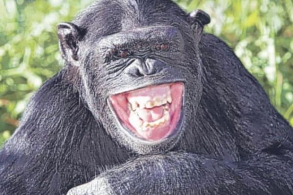 Freddure | barzellette lampo per risate a crepapelle!