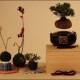 Bonsai volanti | Una novità dal Giappone / Image 1