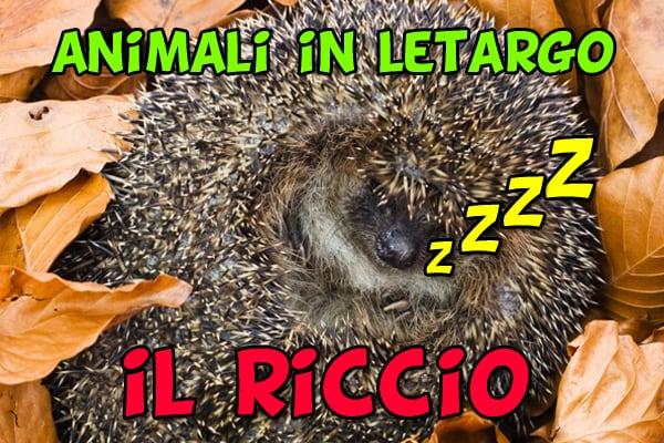 Animali in letargo: il riccio