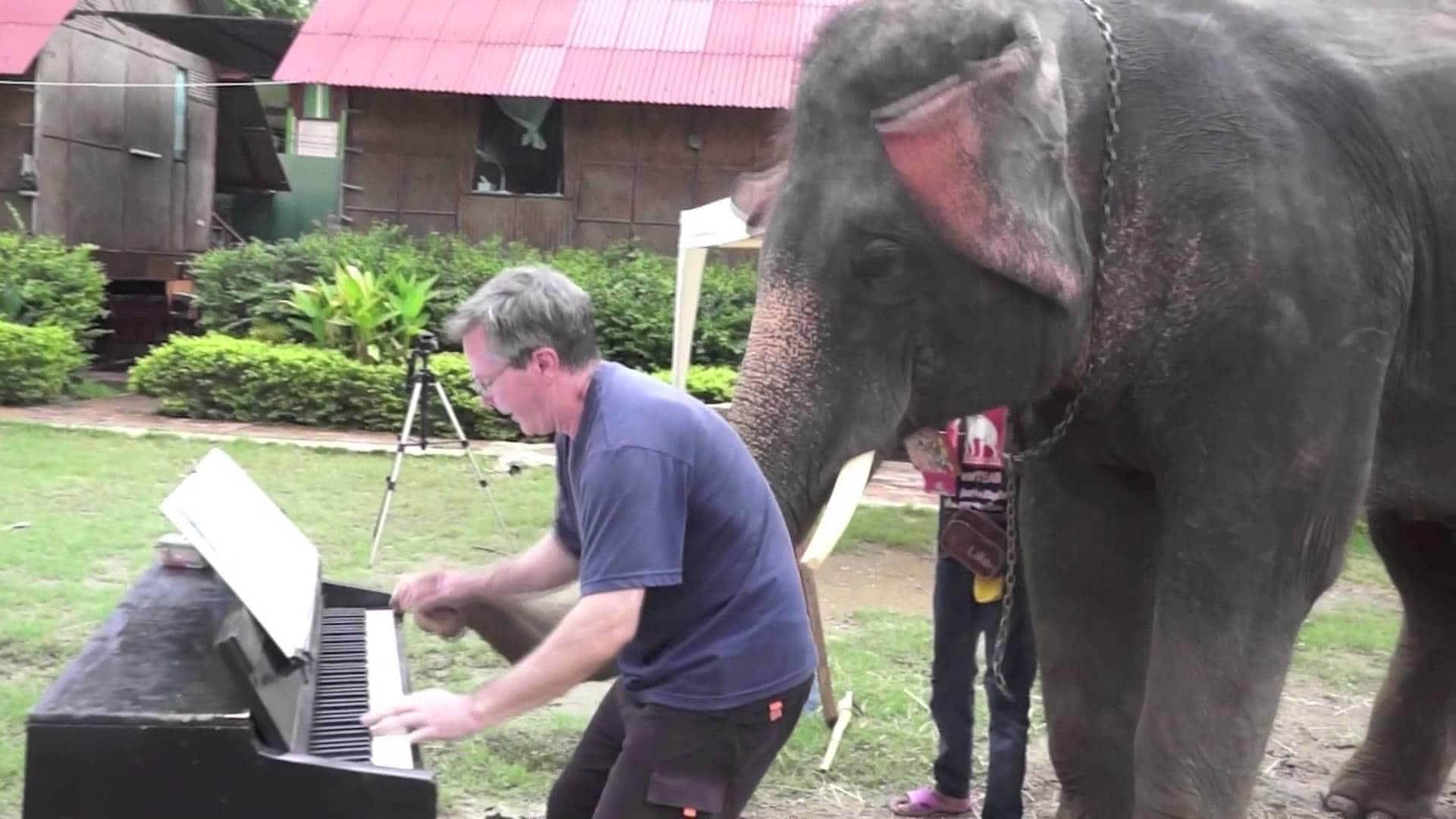 Ecco Peter, l'elefante che suona il pianoforte [Video]
