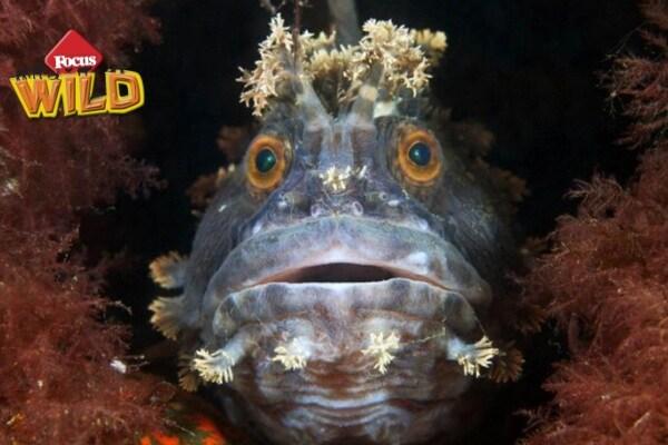 Curiosità animali: creature marine straordinarie | Focus Wild