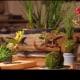 Bonsai volanti | Una novità dal Giappone / Image 2