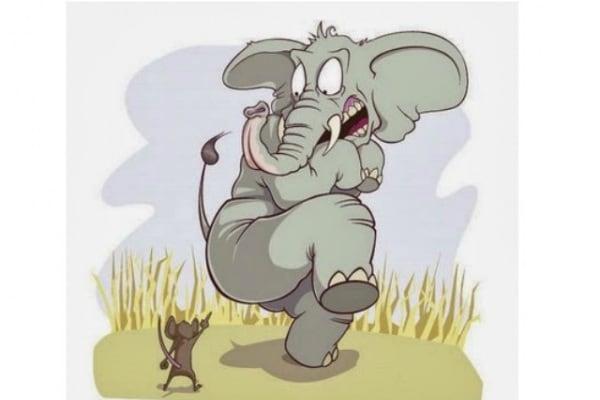Curiosità animali | È vero che gli elefanti hanno paura dei topi?