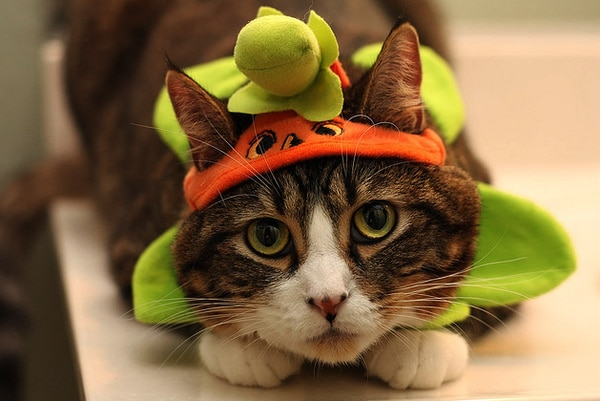 Fotogallery | Halloween da gatti!