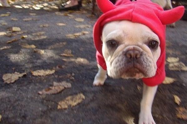Cani da Halloween!